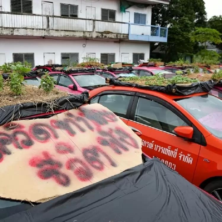 From Bangkok's abandoned taxis, a surreal garden sprouts